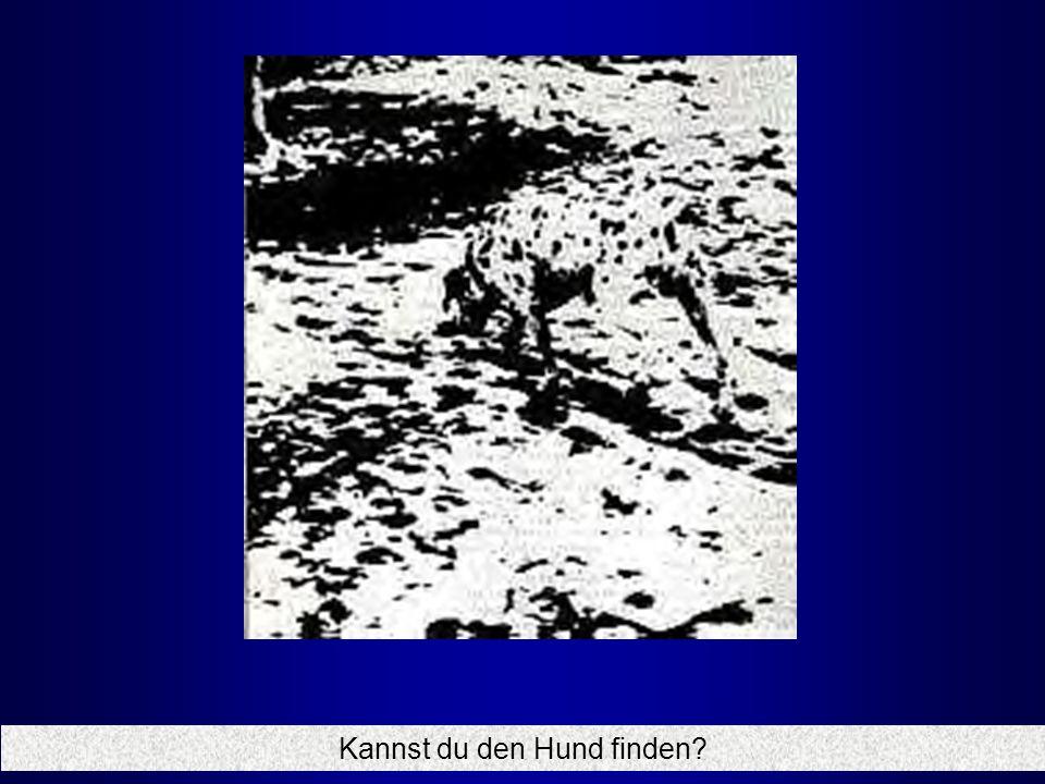 Kannst du den Hund finden?