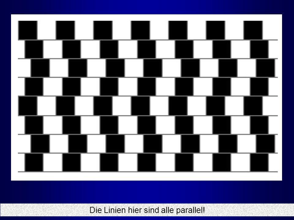 Die Linien hier sind alle parallel!