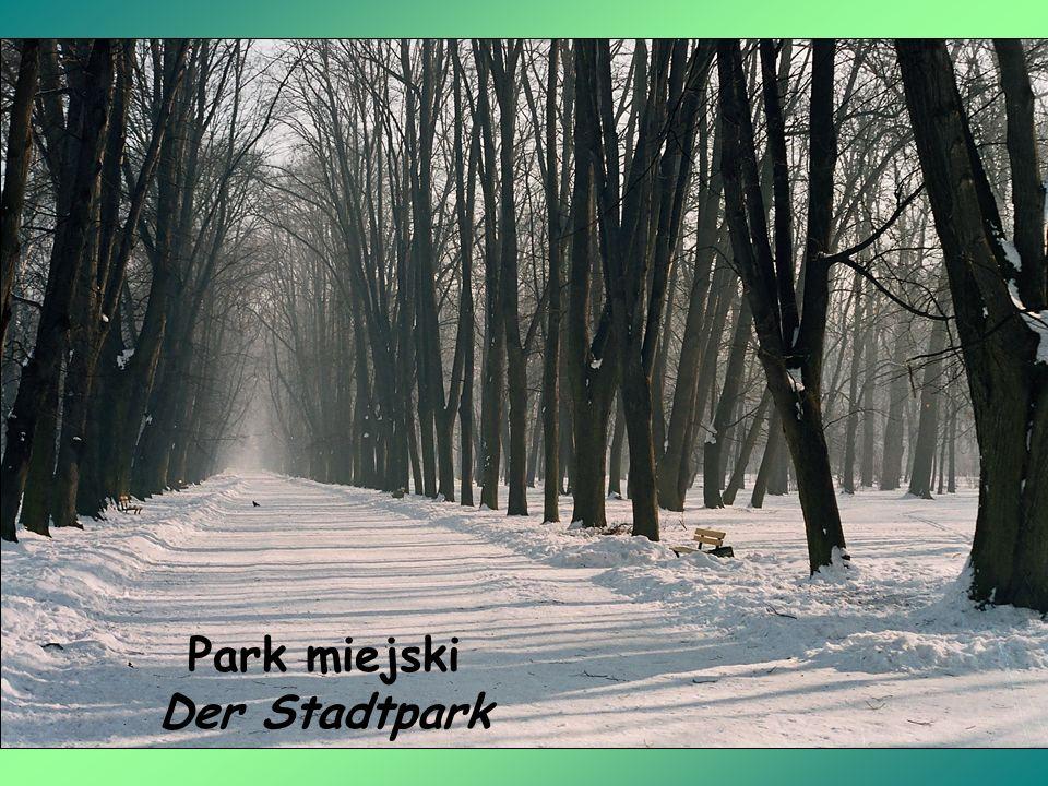 Park miejski Der Stadtpark