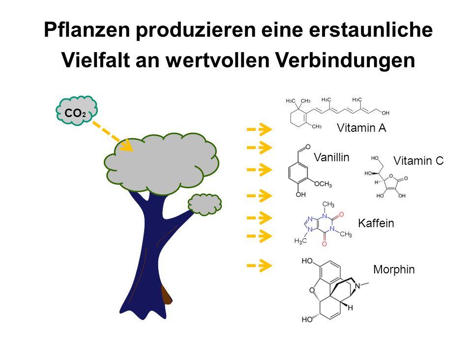 Pflanzen produzieren eine erstaunliche Vielfalt an wertvollen Verbindungen Vitamin A Vitamin C Vanillin Kaffein Morphin CO 2