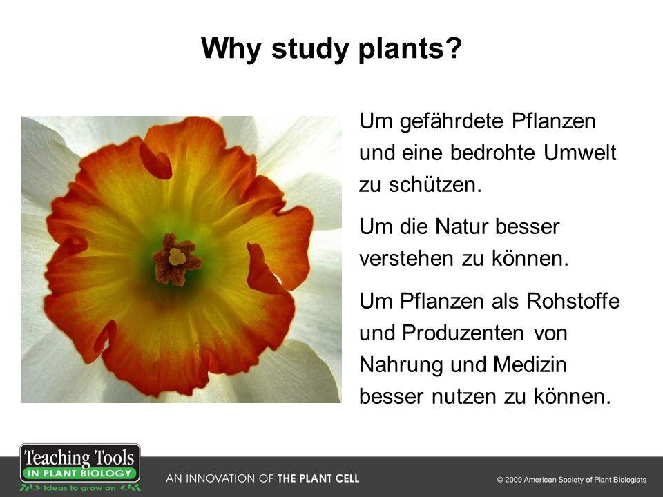Why study plants? Um gefährdete Pflanzen und eine bedrohte Umwelt zu schützen. Um die Natur besser verstehen zu können. Um Pflanzen als Rohstoffe und