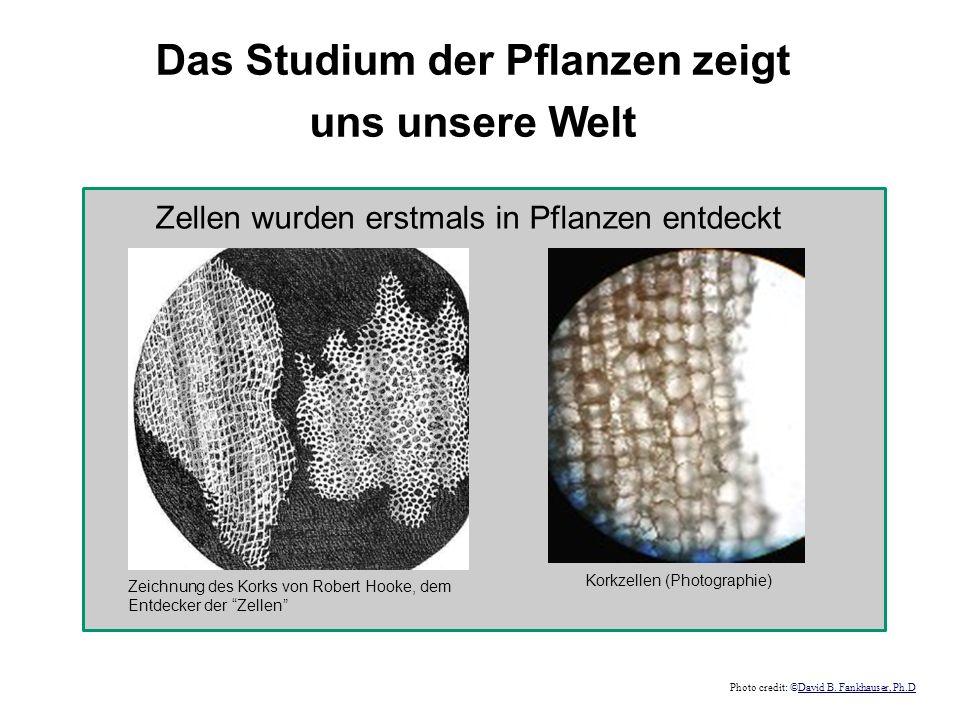 Das Studium der Pflanzen zeigt uns unsere Welt Zeichnung des Korks von Robert Hooke, dem Entdecker der Zellen Zellen wurden erstmals in Pflanzen entde