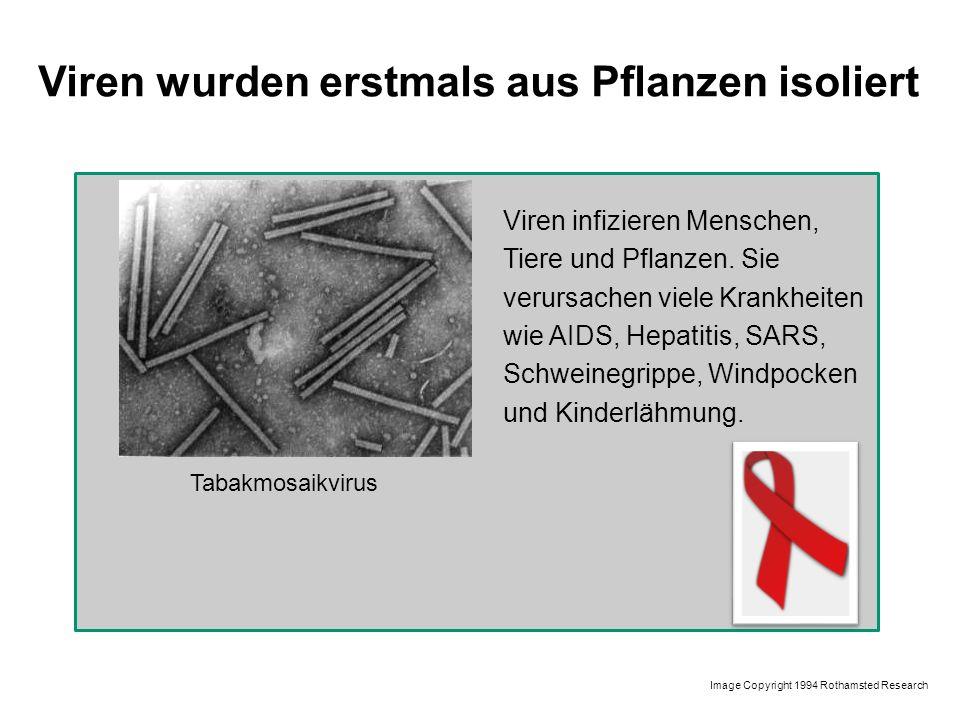 Viren wurden erstmals aus Pflanzen isoliert Tabakmosaikvirus Viren infizieren Menschen, Tiere und Pflanzen. Sie verursachen viele Krankheiten wie AIDS