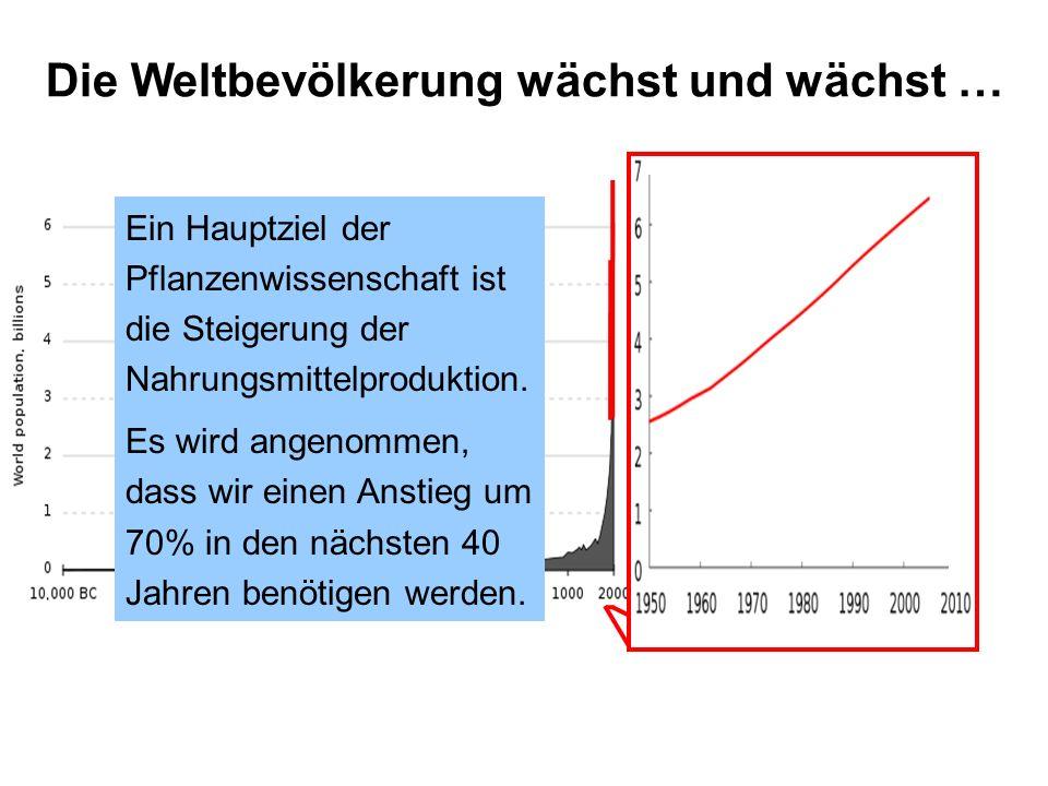 Ein Hauptziel der Pflanzenwissenschaft ist die Steigerung der Nahrungsmittelproduktion. Es wird angenommen, dass wir einen Anstieg um 70% in den nächs