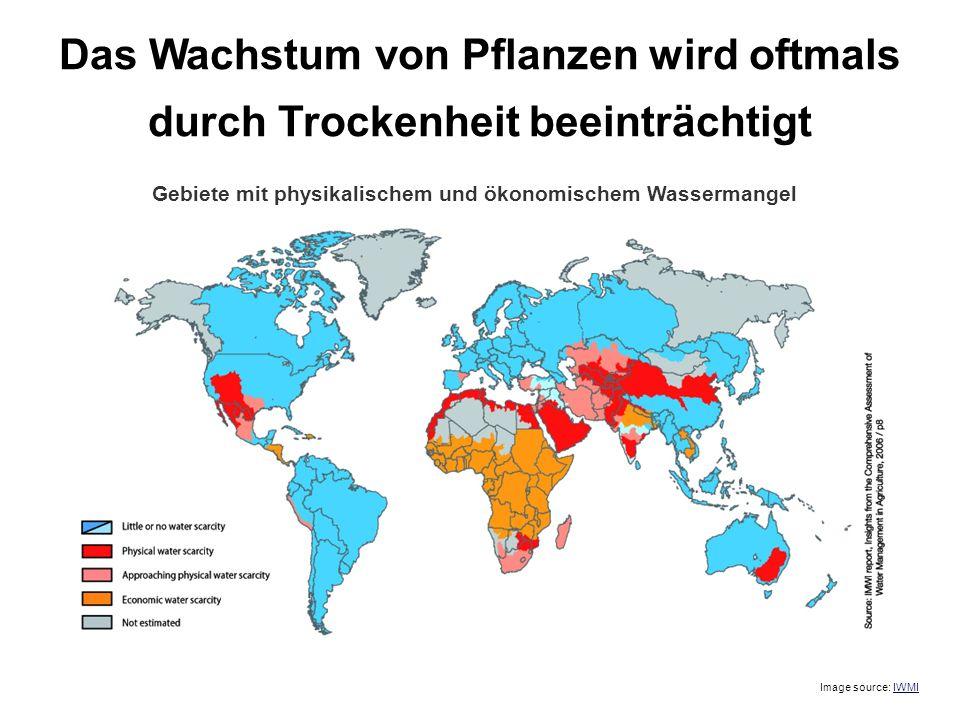 Das Wachstum von Pflanzen wird oftmals durch Trockenheit beeinträchtigt Image source: IWMI Gebiete mit physikalischem und ökonomischem Wassermangel