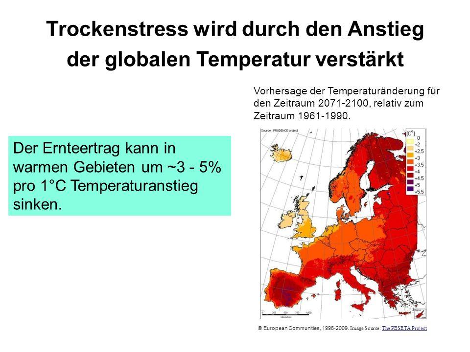 Trockenstress wird durch den Anstieg der globalen Temperatur verstärkt Der Ernteertrag kann in warmen Gebieten um ~3 - 5% pro 1°C Temperaturanstieg si