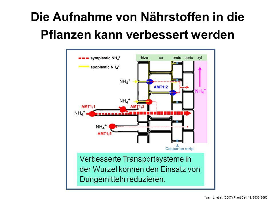 Yuan, L. et al. (2007) Plant Cell 19: 2636-2652 Die Aufnahme von Nährstoffen in die Pflanzen kann verbessert werden Verbesserte Transportsysteme in de