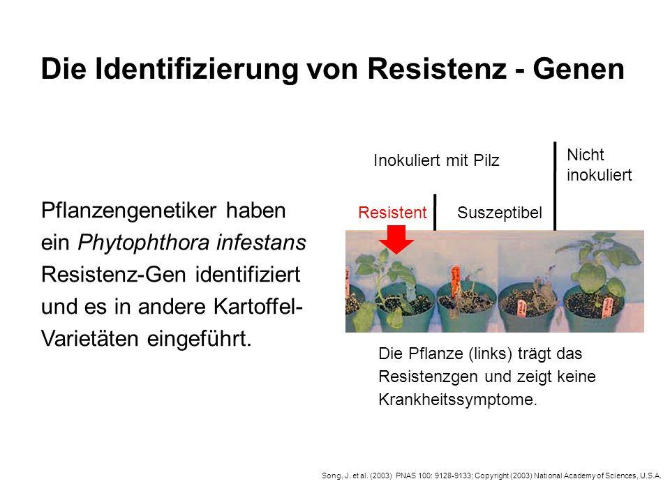 Die Identifizierung von Resistenz - Genen Resistent Inokuliert mit Pilz Nicht inokuliert Suszeptibel Die Pflanze (links) trägt das Resistenzgen und ze