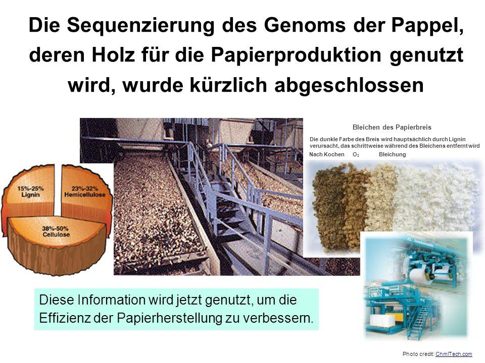 Die Sequenzierung des Genoms der Pappel, deren Holz für die Papierproduktion genutzt wird, wurde kürzlich abgeschlossen Diese Information wird jetzt g