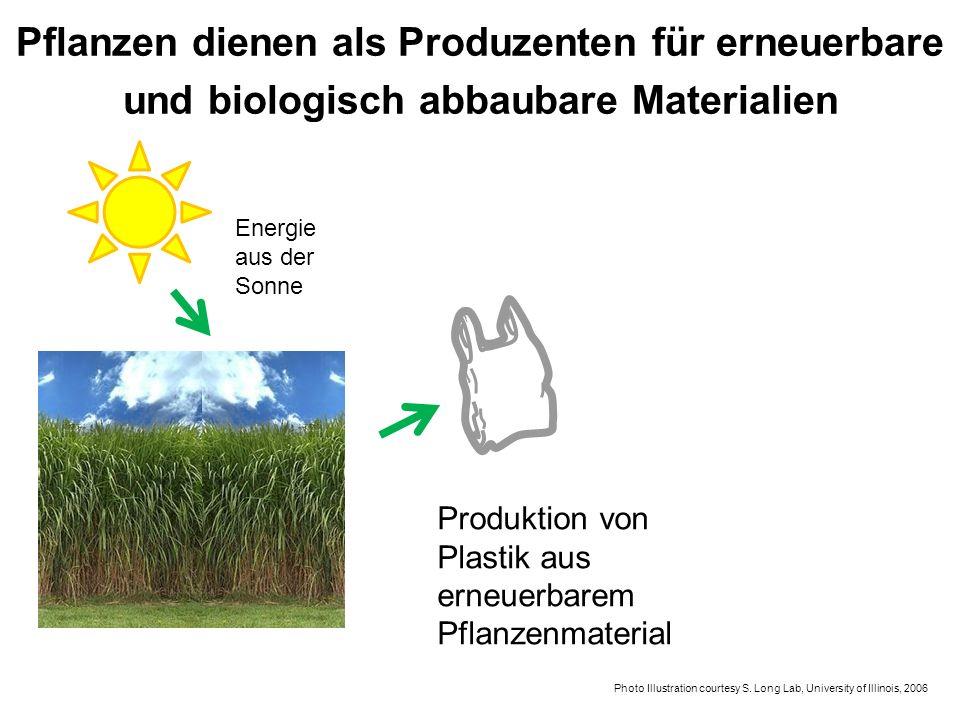 Produktion von Plastik aus erneuerbarem Pflanzenmaterial Energie aus der Sonne Photo Illustration courtesy S. Long Lab, University of Illinois, 2006 P