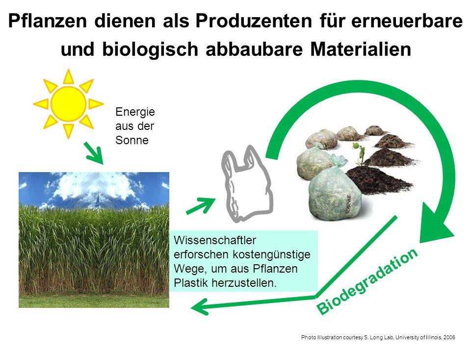 Biodegradation Wissenschaftler erforschen kostengünstige Wege, um aus Pflanzen Plastik herzustellen. Photo Illustration courtesy S. Long Lab, Universi