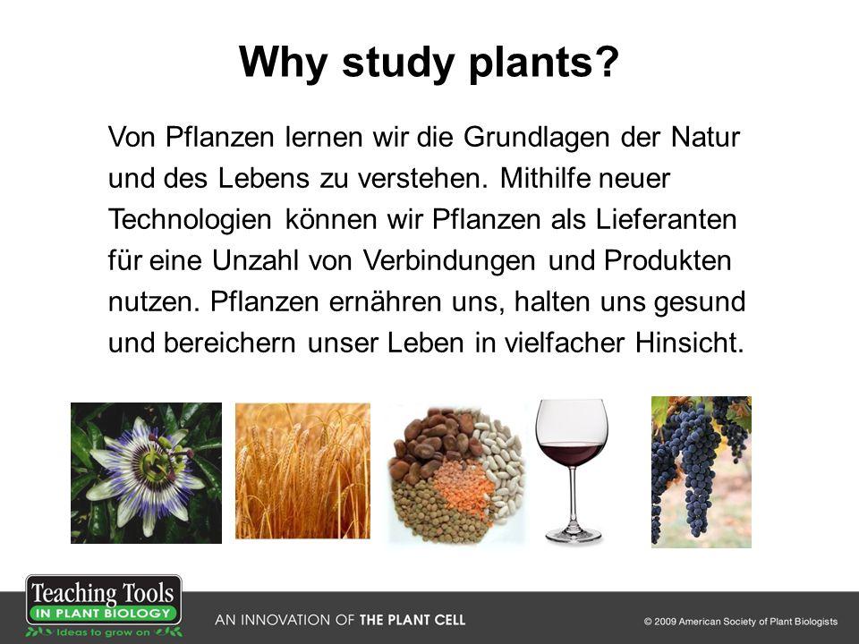 Why study plants? Von Pflanzen lernen wir die Grundlagen der Natur und des Lebens zu verstehen. Mithilfe neuer Technologien können wir Pflanzen als Li