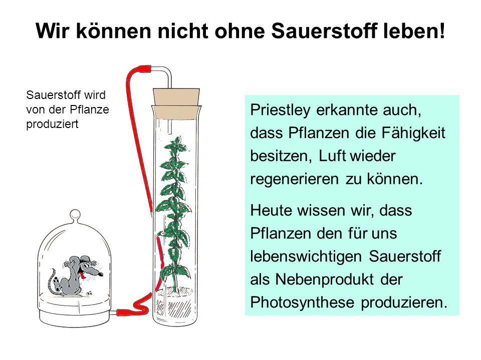 Priestley erkannte auch, dass Pflanzen die Fähigkeit besitzen, Luft wieder regenerieren zu können. Heute wissen wir, dass Pflanzen den für uns lebensw