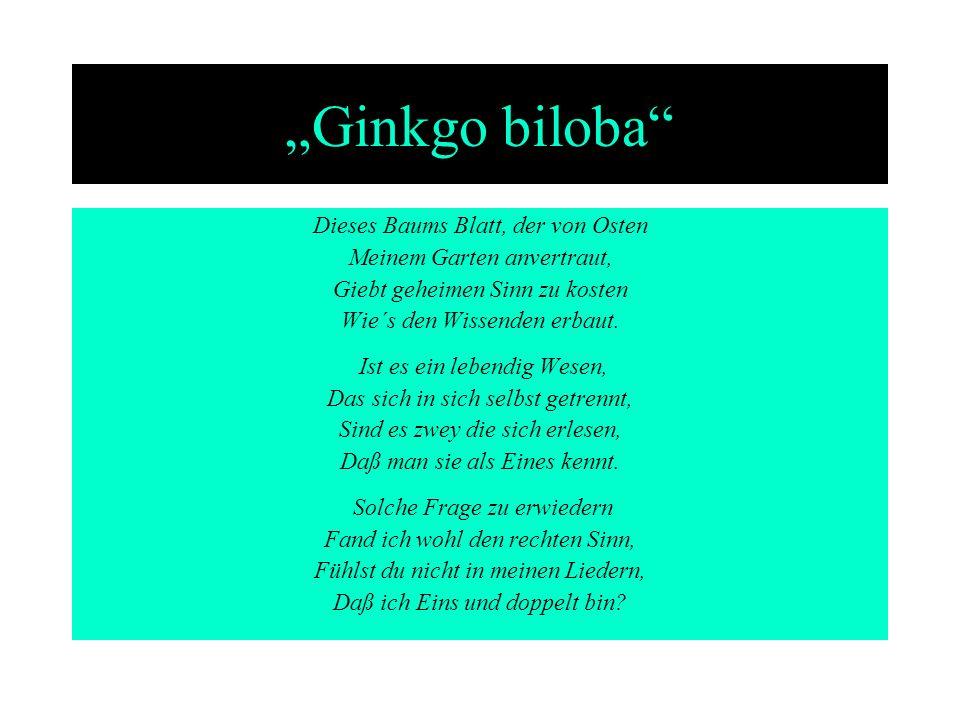 Ginkgo biloba Dieses Baums Blatt, der von Osten Meinem Garten anvertraut, Giebt geheimen Sinn zu kosten Wie´s den Wissenden erbaut. Ist es ein lebendi