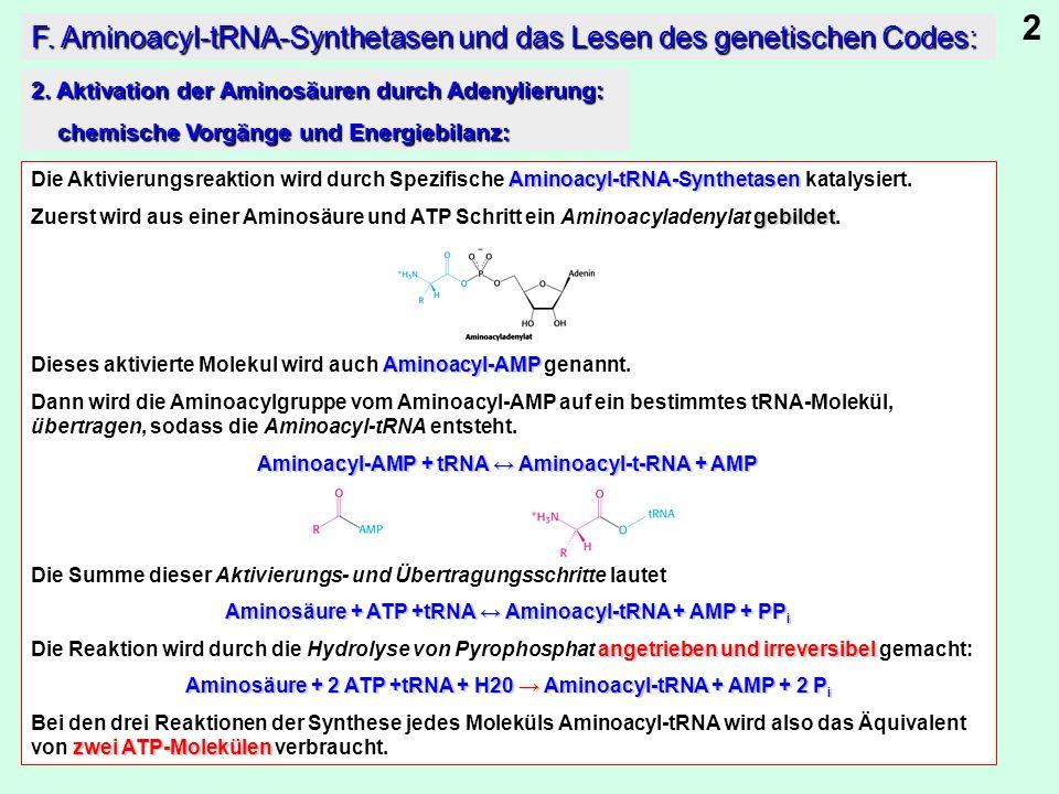 Aminoacyl-tRNA-Synthetasen Die Aktivierungsreaktion wird durch Spezifische Aminoacyl-tRNA-Synthetasen katalysiert. gebildet Zuerst wird aus einer Amin