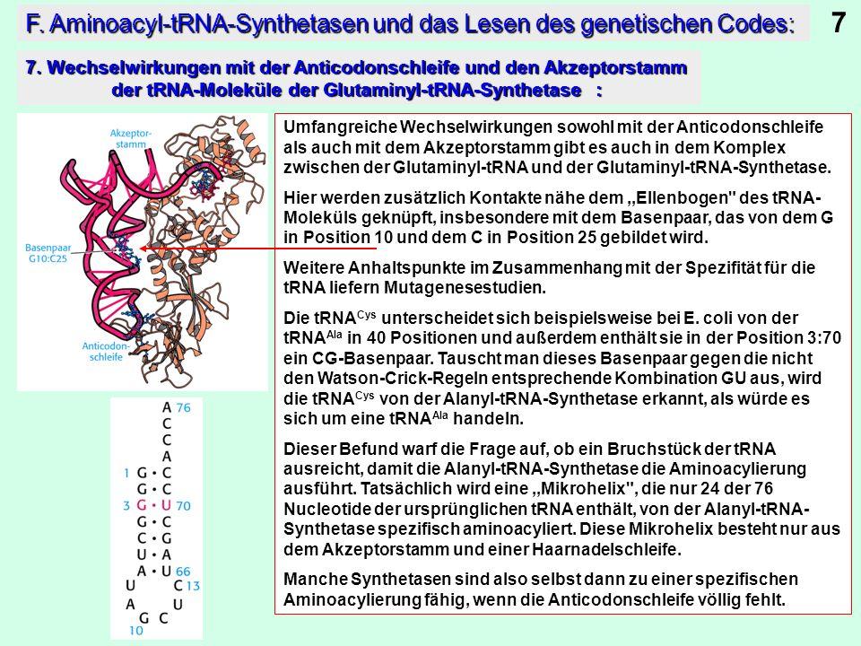 Umfangreiche Wechselwirkungen sowohl mit der Anticodonschleife als auch mit dem Akzeptorstamm gibt es auch in dem Komplex zwischen der Glutaminyl-tRNA