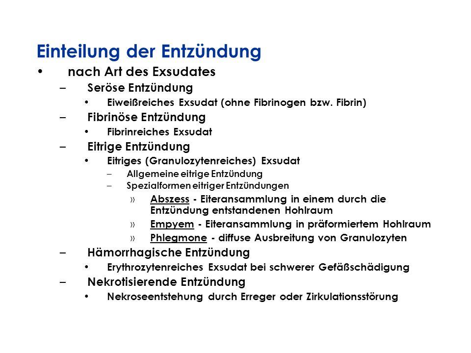 Einteilung der Entzündung nach Art des Exsudates – Seröse Entzündung Eiweißreiches Exsudat (ohne Fibrinogen bzw. Fibrin) – Fibrinöse Entzündung Fibrin