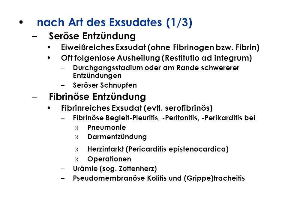 nach Art des Exsudates (1/3) – Seröse Entzündung Eiweißreiches Exsudat (ohne Fibrinogen bzw. Fibrin) Oft folgenlose Ausheilung (Restitutio ad integrum