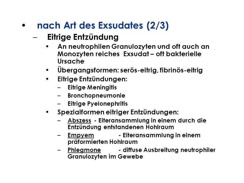 nach Art des Exsudates (2/3) – Eitrige Entzündung An neutrophilen Granulozyten und oft auch an Monozyten reiches Exsudat – oft bakterielle Ursache Übe