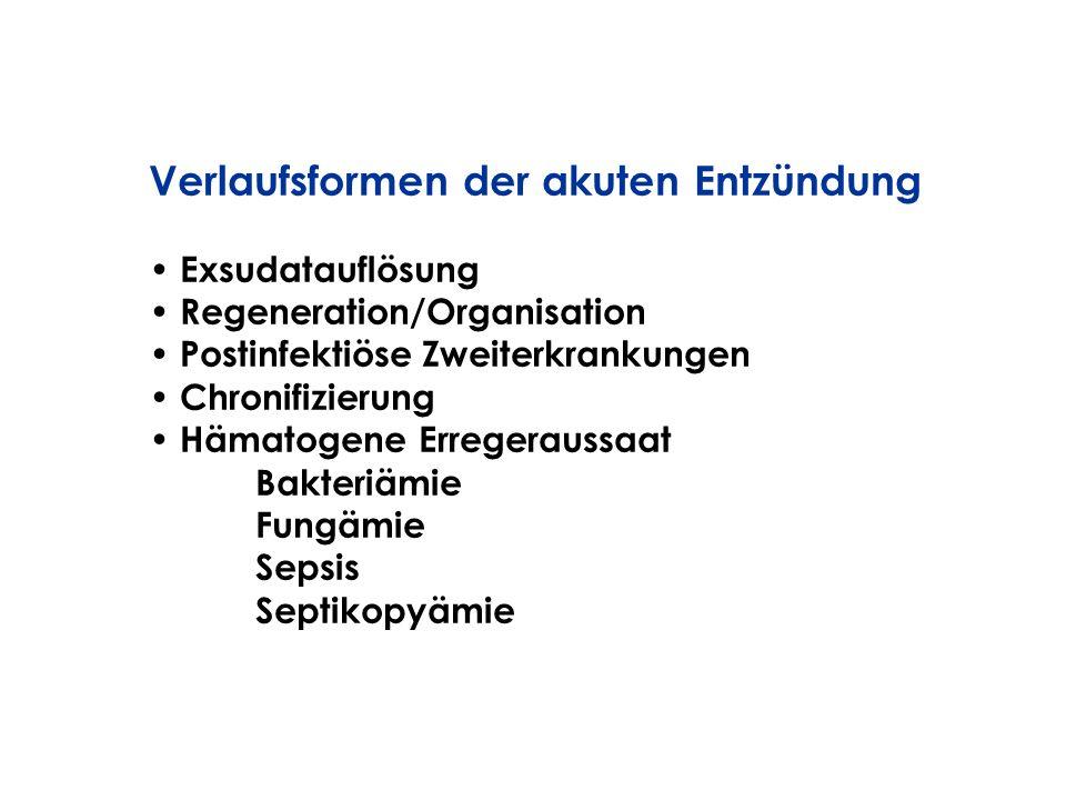 Verlaufsformen der akuten Entzündung Exsudatauflösung Regeneration/Organisation Postinfektiöse Zweiterkrankungen Chronifizierung Hämatogene Erregeraus