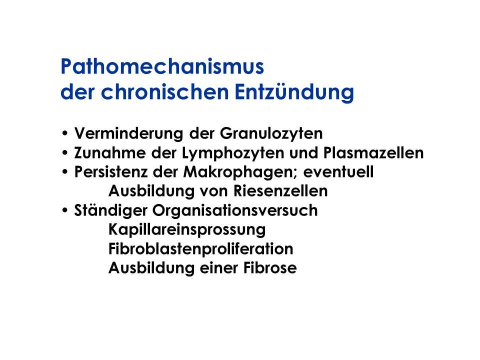 Pathomechanismus der chronischen Entzündung Verminderung der Granulozyten Zunahme der Lymphozyten und Plasmazellen Persistenz der Makrophagen; eventue