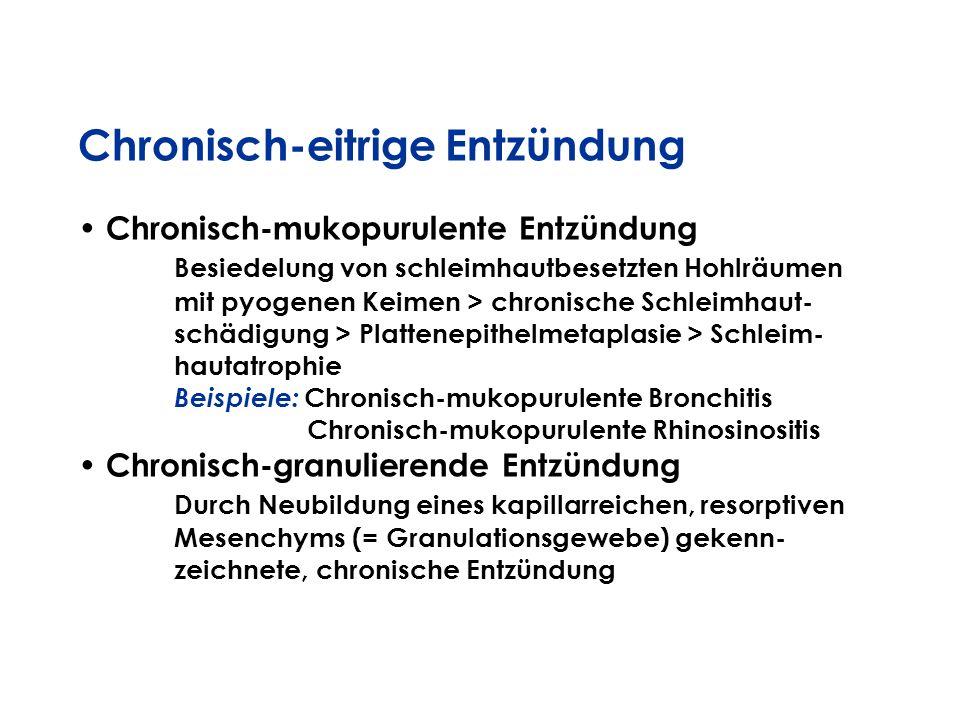 Chronisch-eitrige Entzündung Chronisch-mukopurulente Entzündung Besiedelung von schleimhautbesetzten Hohlräumen mit pyogenen Keimen > chronische Schle