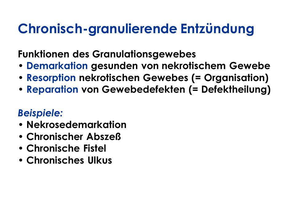 Chronisch-granulierende Entzündung Funktionen des Granulationsgewebes Demarkation gesunden von nekrotischem Gewebe Resorption nekrotischen Gewebes (=