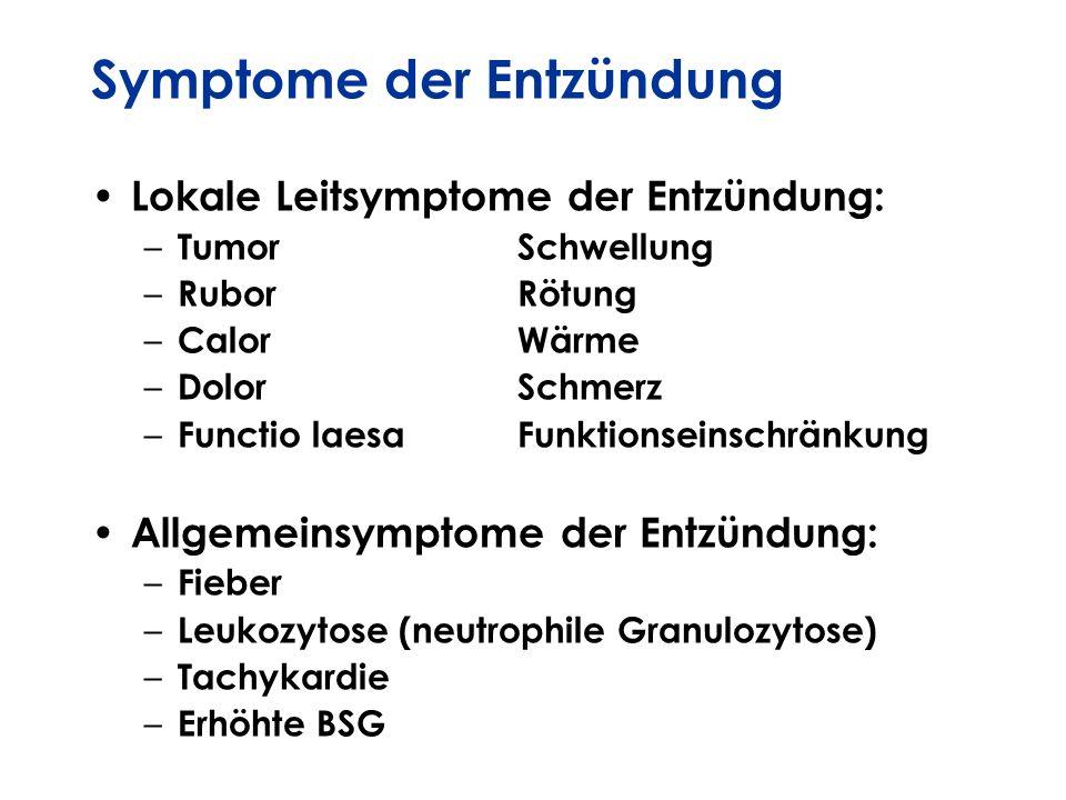 Symptome der Entzündung Lokale Leitsymptome der Entzündung: – TumorSchwellung – RuborRötung – CalorWärme – DolorSchmerz – Functio laesaFunktionseinsch