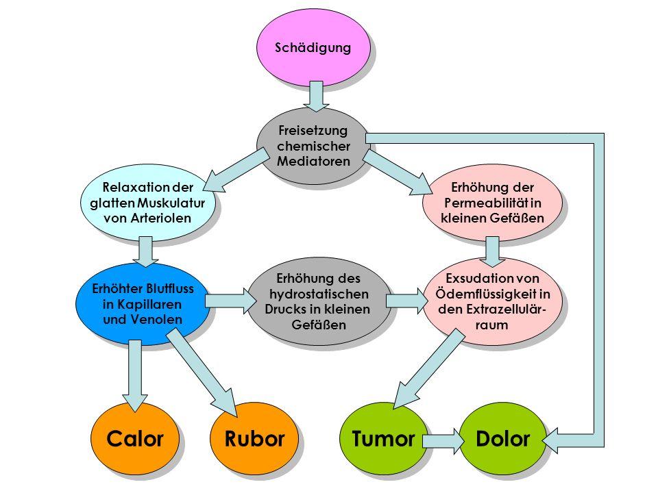 Freisetzung chemischer Mediatoren Freisetzung chemischer Mediatoren Schädigung Erhöhung der Permeabilität in kleinen Gefäßen Erhöhung der Permeabilitä