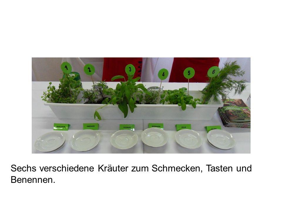 Unten: Andrang von Schüler/innen vor dem Geschmackstest und vor Das Auge isst mit.