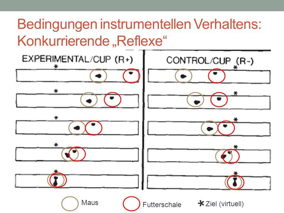 Futterschale Maus * Ziel (virtuell) Bedingungen instrumentellen Verhaltens: Konkurrierende Reflexe