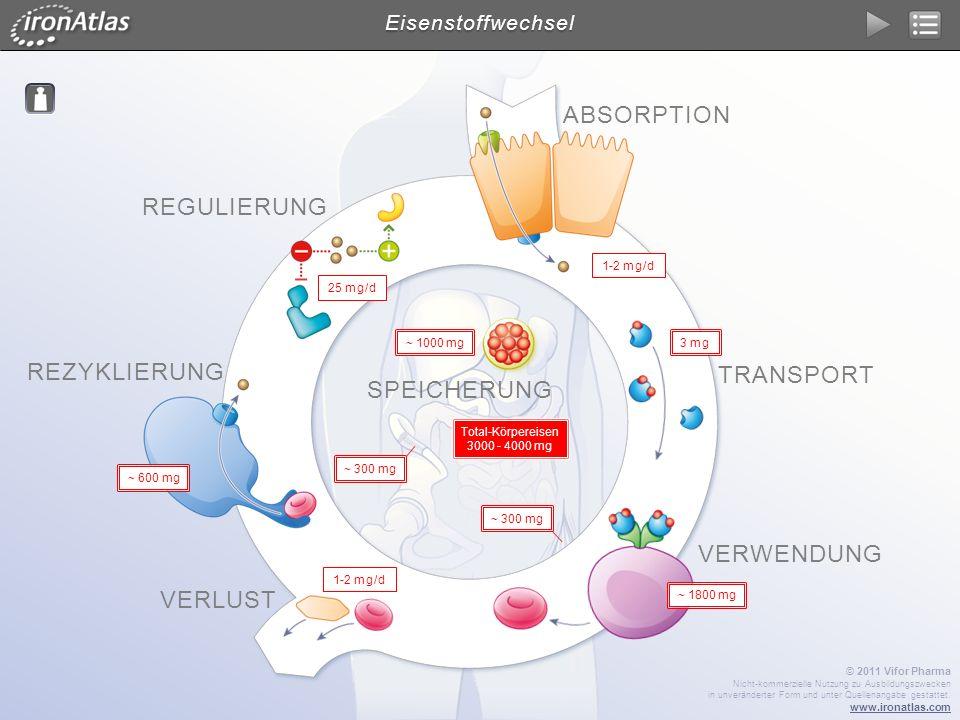 REGULIERUNG BEI EISENMANGEL Eisenstoffwechsel - Regulierung © 2011 Vifor Pharma Nicht-kommerzielle Nutzung zu Ausbildungszwecken in unveränderter Form und unter Quellenangabe gestattet.