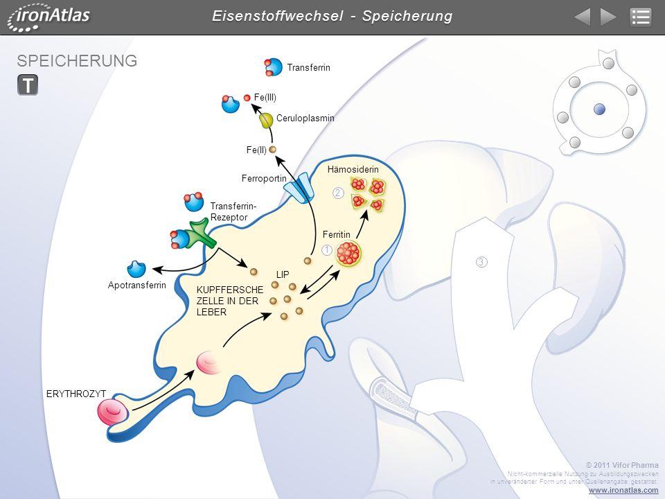 SPEICHERUNG Eisenstoffwechsel - Speicherung © 2011 Vifor Pharma Nicht-kommerzielle Nutzung zu Ausbildungszwecken in unveränderter Form und unter Quell