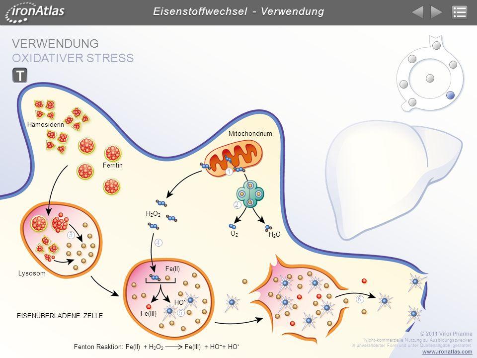VERWENDUNG OXIDATIVER STRESS Eisenstoffwechsel - Verwendung © 2011 Vifor Pharma Nicht-kommerzielle Nutzung zu Ausbildungszwecken in unveränderter Form