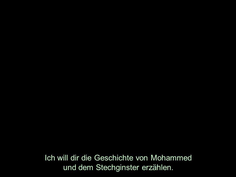 Ich will dir die Geschichte von Mohammed und dem Stechginster erzählen.