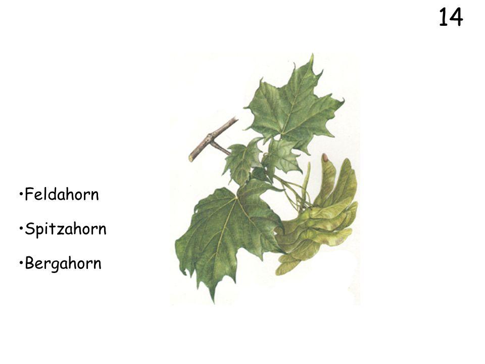 12 Heckenrose Weissdorn Pfaffenhütchen