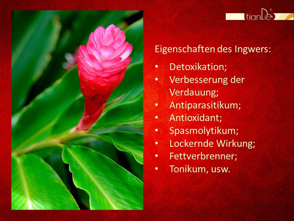 Eigenschaften des Ingwers: Detoxikation; Verbesserung der Verdauung; Antiparasitikum; Antioxidant; Spasmolytikum; Lockernde Wirkung; Fettverbrenner; T