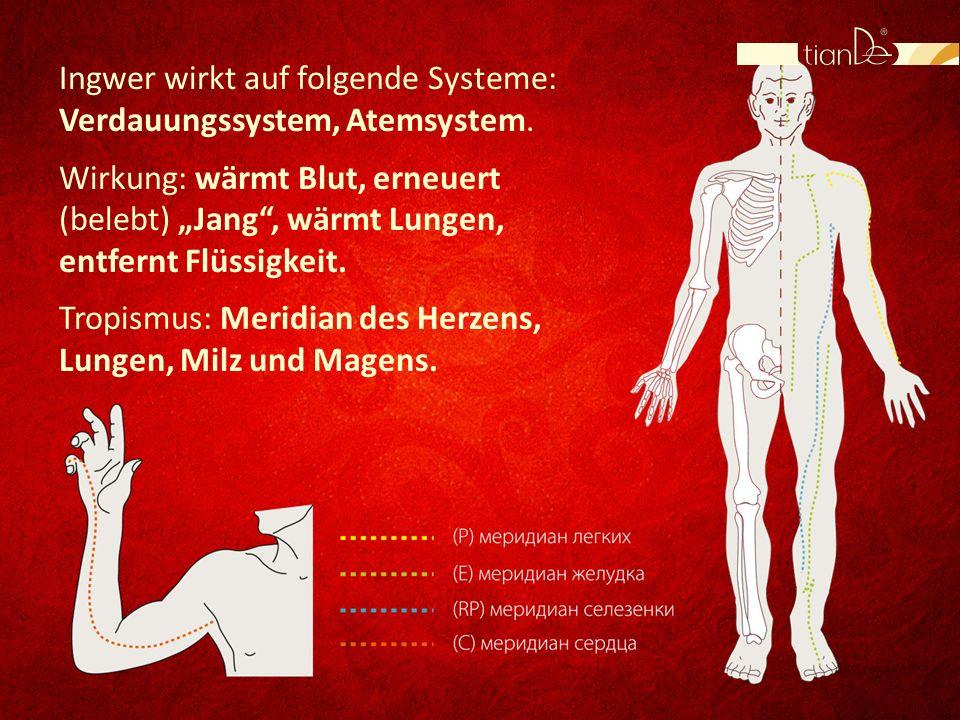 Ingwer wirkt auf folgende Systeme: Verdauungssystem, Atemsystem. Wirkung: wärmt Blut, erneuert (belebt) Jang, wärmt Lungen, entfernt Flüssigkeit. Trop
