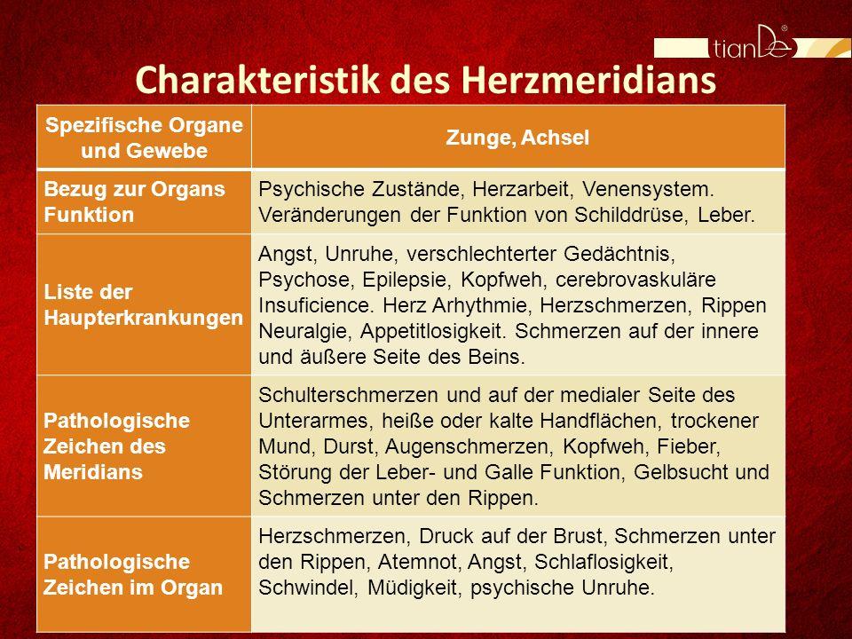 Eigenschaften des Ingwers: Detoxikation; Verbesserung der Verdauung; Antiparasitikum; Antioxidant; Spasmolytikum; Lockernde Wirkung; Fettverbrenner; Tonikum, usw.
