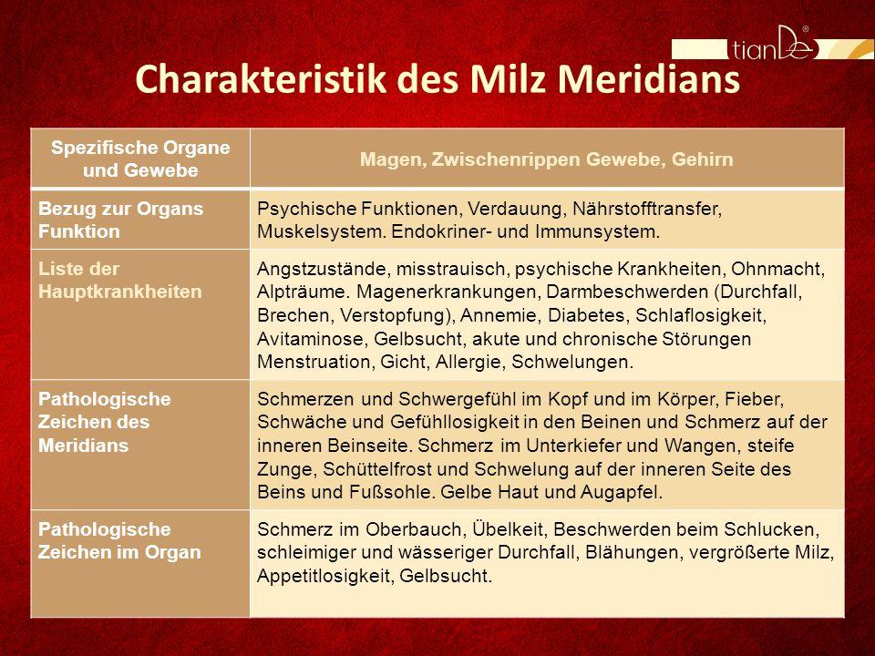 Charakteristik des Milz Meridians Spezifische Organe und Gewebe Magen, Zwischenrippen Gewebe, Gehirn Bezug zur Organs Funktion Psychische Funktionen,