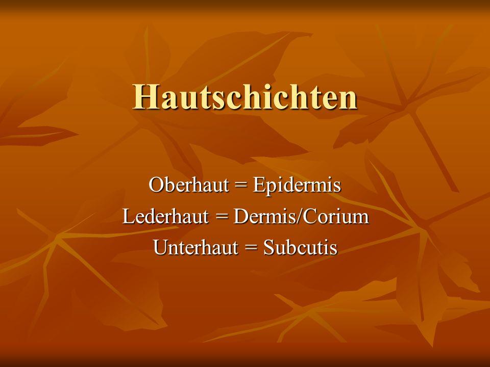 Hautschichten Oberhaut = Epidermis Lederhaut = Dermis/Corium Unterhaut = Subcutis