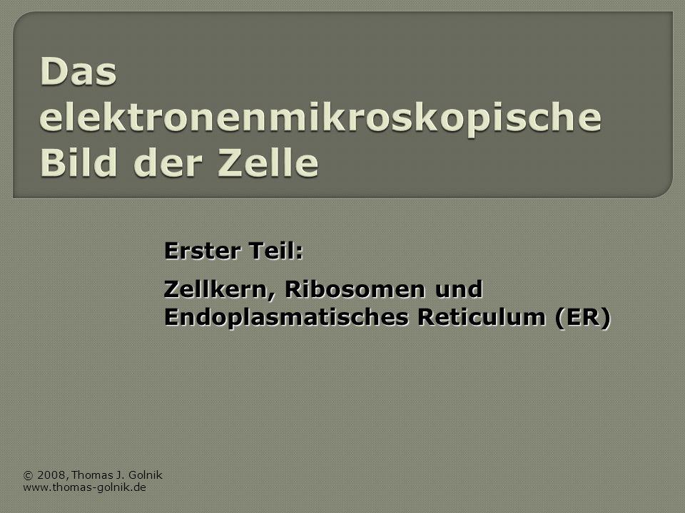 Erster Teil: Zellkern, Ribosomen und Endoplasmatisches Reticulum (ER) © 2008, Thomas J. Golnik www.thomas-golnik.de