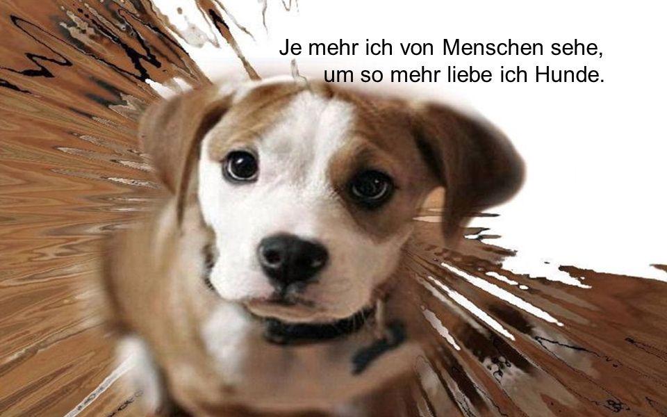 Egal wie wenig Geld und Besitz du hast, einen Hund zu haben, macht dich reich!