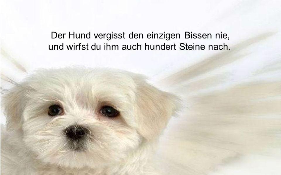 Durch den Verstand des Hundes besteht die Welt.