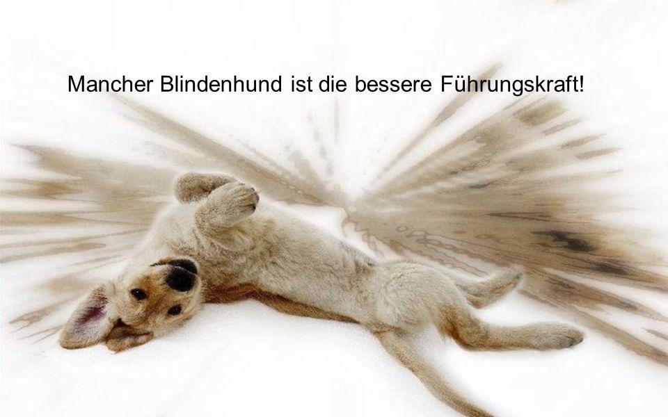 Gib den Menschen einen Hund und seine Seele wird gesund!