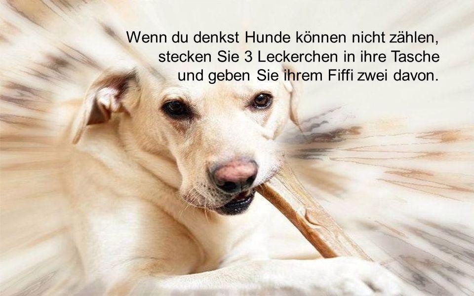 Mancher Blindenhund ist die bessere Führungskraft!