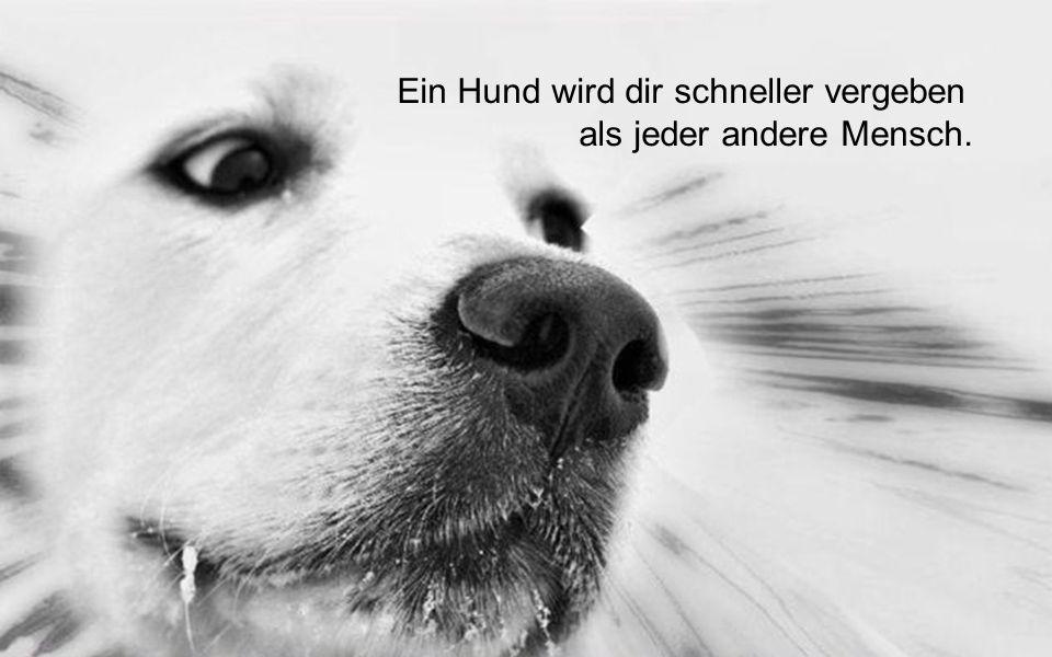 Hunde sind nicht unser ganzes Leben, aber sie machen unser Leben ganz.