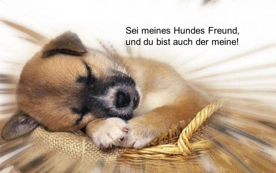 Ein Hund wird dir schneller vergeben als jeder andere Mensch.