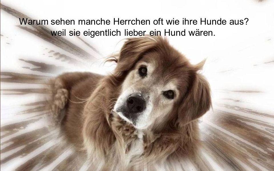 Geld macht nicht glücklich, aber ein Hund.