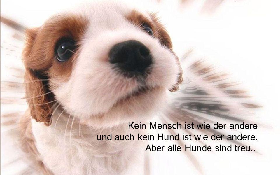 Geheimnis einer glücklichen Beziehung zwischen Mann und Hund liegt darin, dass der Hund nicht streitet.